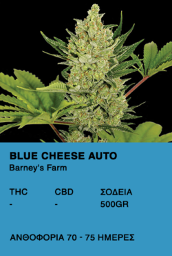 Blue Cheese Auto - Barney's Farm