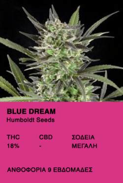 Blue Dream-Humboldt Seeds