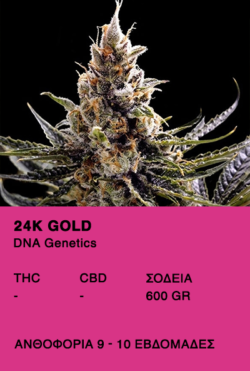 24K GOLD - DNA Genetics
