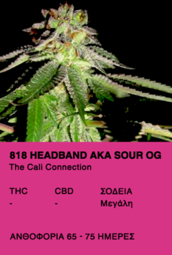 818 Headband aka Sour OG - The cali Connection