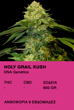 Holy Grail Kush - DNA Genetics