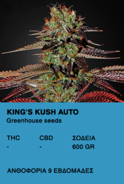 King's Kush Auto - Greenhouse seeds