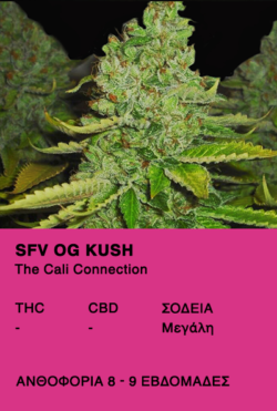 SFV OG KUSH - The Cali Connection