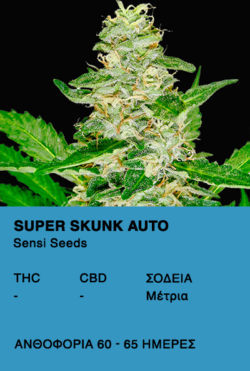 Super Skunk Auto - Sensi Seeds