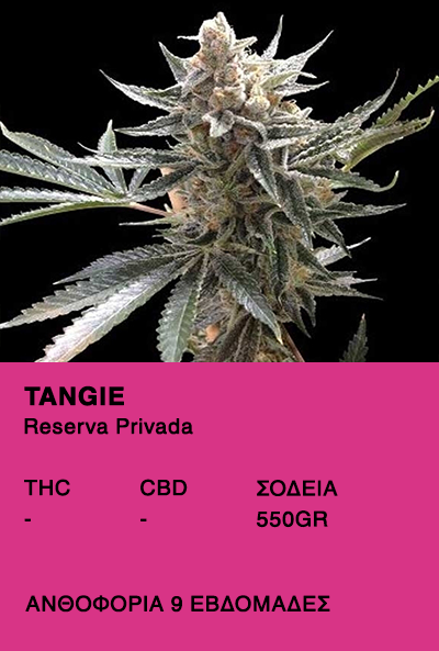 Tangie- Reserve Privada