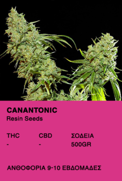 Cannatonic-Resin Seeds