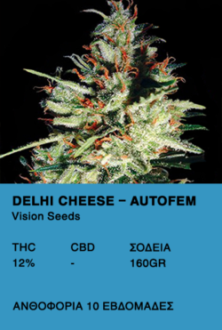 Delhi Cheese AutoFem-Vision Seeds