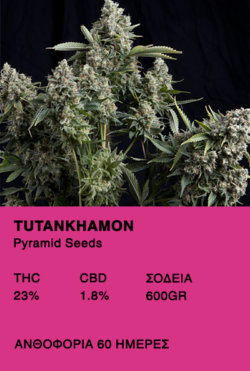 Tutankhamon-Pyrmamid Seeds