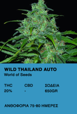 Wild Thailand Auto-World of seeds