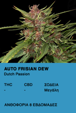 Auto Frisian Dew - Dutch Passion