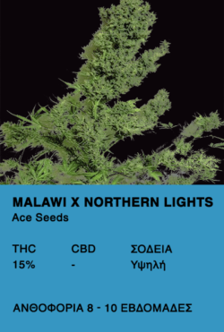Auto Malawi x Northern Lights-Ace Seeds