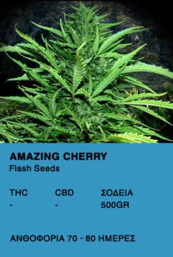 Amazing Cherry Auto - Flash Seeds