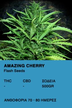Amazing Cherry Auto - Flash Seeds