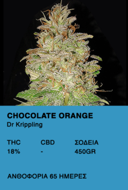 Chocolate Orange-Dr.Krippling