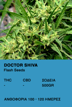 DoctorDoctor Shiva Super Auto-Flash Seeds Shiva Super Auto