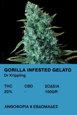 Gorilla infested gelato-Dr.Kippling