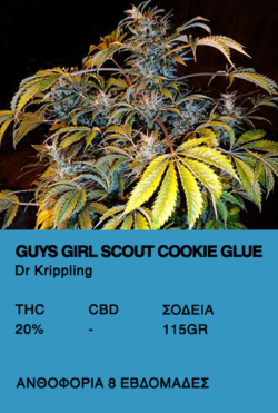 Guys Girl Scout Cookie Glue-Dr. Krippling