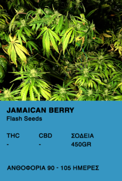 Jamaican Berry Super Auto-Flash Seeds