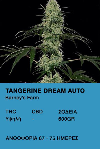 Tangerine Dream Auto