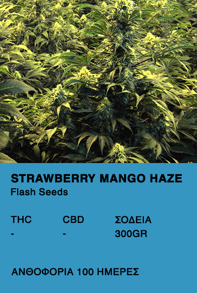 Strawberry Mango Haze Super Auto-Flash seeds