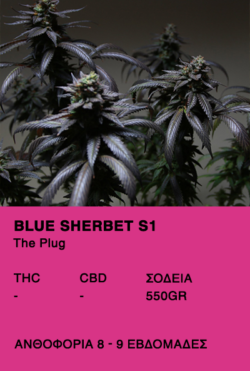 Blue Sherbet S1-The Plug