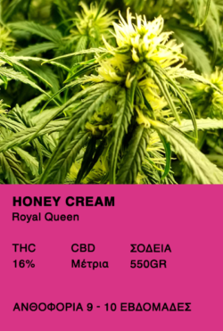 Honey Cream-Royal Queen