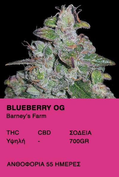 Blueberry OG-Barney's Farm