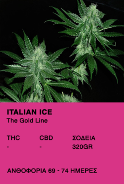 Italian Ice-The Gold Line