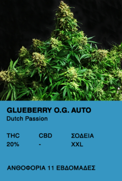 Glueberry O.G. Auto - Dutch Passion
