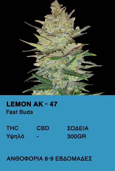 Lemon AK Auto
