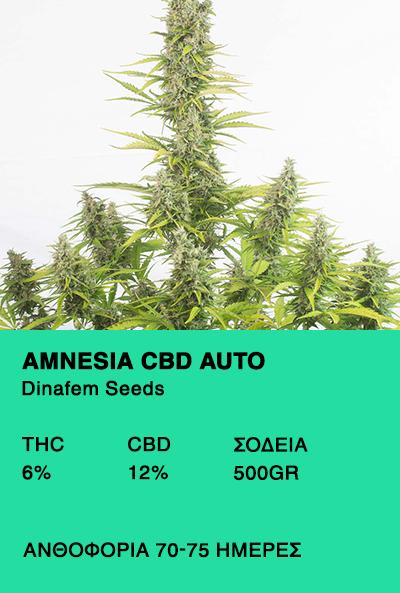 Amnesia CBD Auto