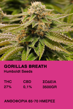 Humboldt Archives • theseedbank gr
