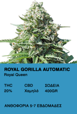 Royal Gorilla Auto