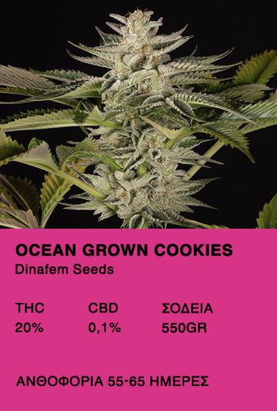 Ocean Grown Cookies