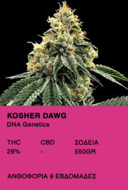 Kosher Dawg