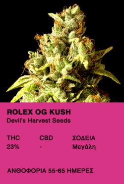 Rollex OG Kush - Devil's Harvest Seeds