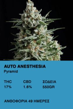 Auto Anesthesia - Pyramid