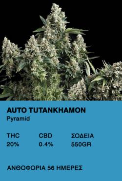 Auto Tutankhamon - Pyramid