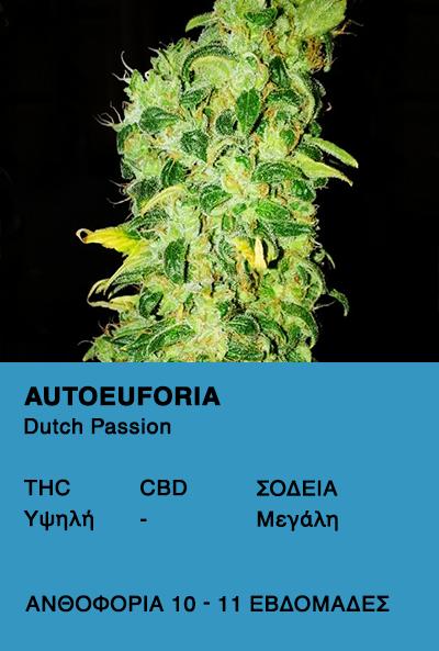 Auto Euforia - Dutch Passion