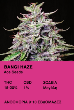 Bangi Haze - Ace seeds