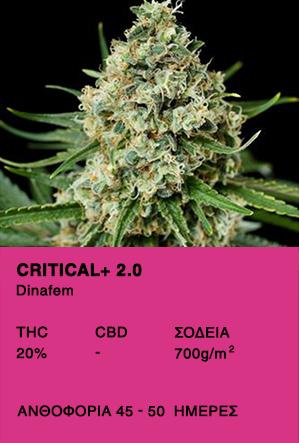 Critical + 2.0 FEM-Dinafem