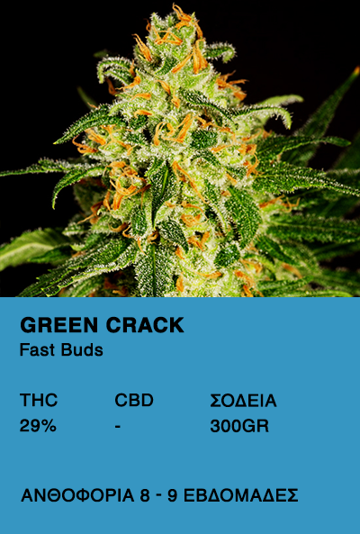 Green Crack-Fast Buds