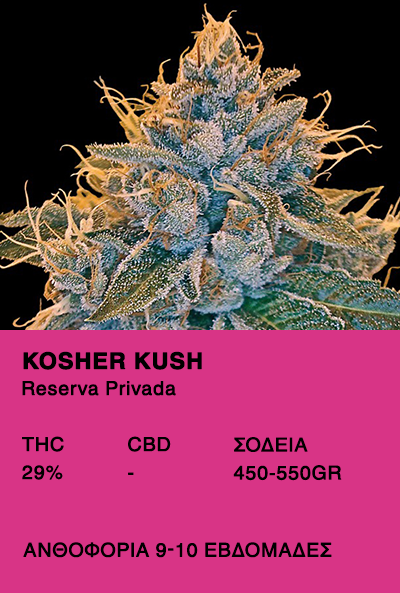 Kosher Kush -Reserva Privada