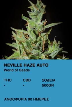 Neville Haze Auto-World of seeds