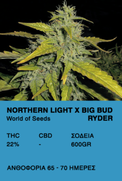 Northern Lights X Big Bud Ryder - World of Seeds