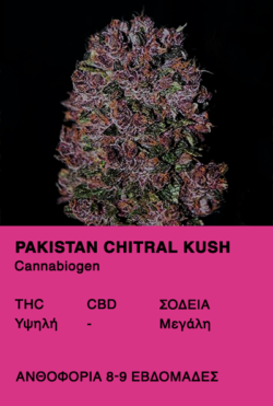 Pakistan Chitral Kush - Cannabiogen