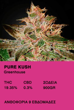 Pure Kush - Greenhouse