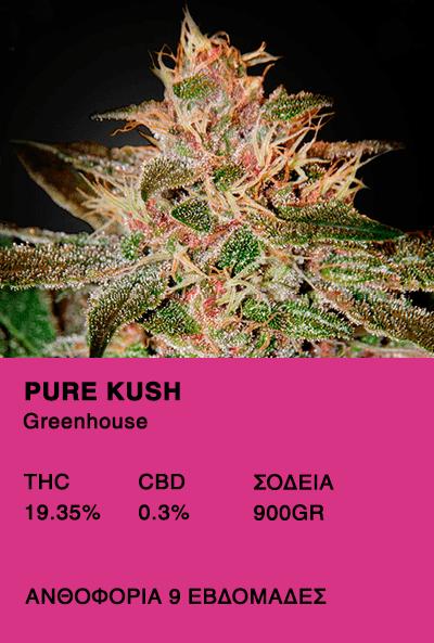 Pure Kush - Greenhouse