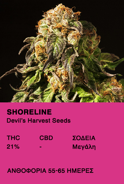 Shoreline - Devil's Harvest Seeds
