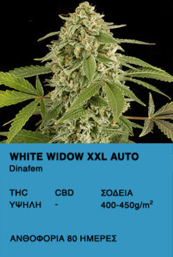 White Widow XXL Auto